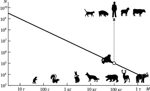 Картинки по запросу численности человечества по сравнению со всеми другими животными